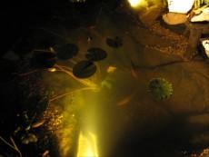 osvetlitev ribnika