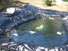polnjenje ribnika