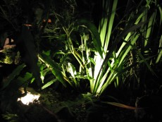 svetloba ob ribniku