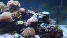 akvarij v hisi