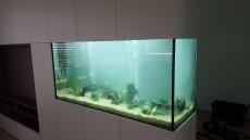 akvarij v steni