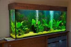 akvarij z diskusi