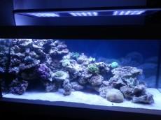 zacetno stanje akvarija