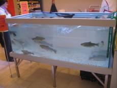 akvarij za postrvi