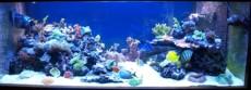 najlepsi morski akvarij