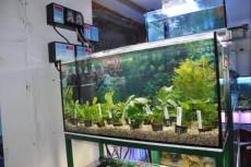 sladkovodne rastline aqua-ro-design