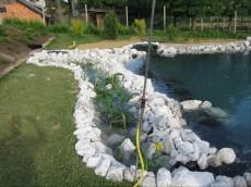 vodne ribniske rastline