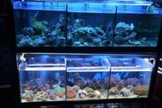 mehke korale