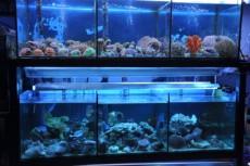 morski organizmi - korale