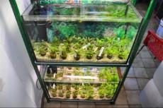 sladkovodne rastline