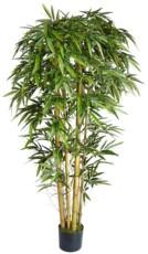 Bambus drevo