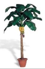 Banana - mali listi