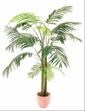 Palma - veliki listi